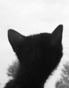 cat, kitten, sky, wonder, pondering, precious, black and white, head