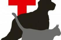 dogcatvaccination-236