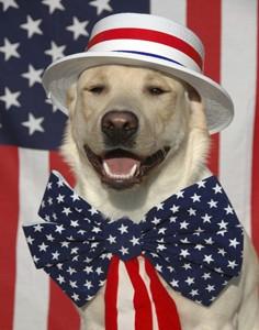 patriotic dog1