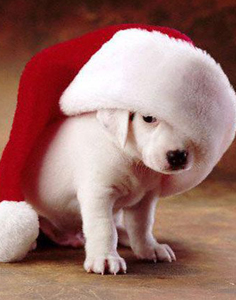 funny_christmas_pictures_dog__large-236
