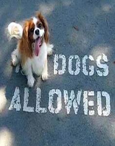Dogfriendly-236
