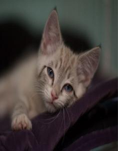 kitten-236