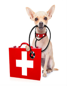 dp-pet-first-aid-broken-arrow-ok-236