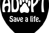 adopt-save236