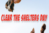 ClearTheShelters_BlogThumb-236