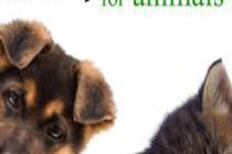 essential oils fpr pets-236