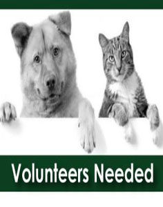 Volunteers-Needed-236