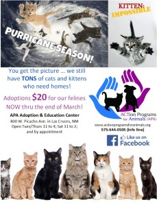 APA-cat kittens for 20