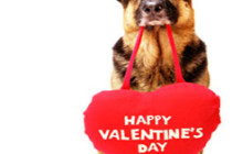 dog-with-valentines-day-heart1-236