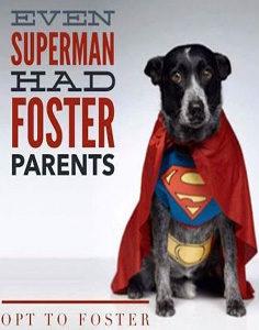 Superman-foster-236