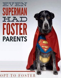 Superman-foster-236