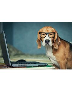 office dog-236